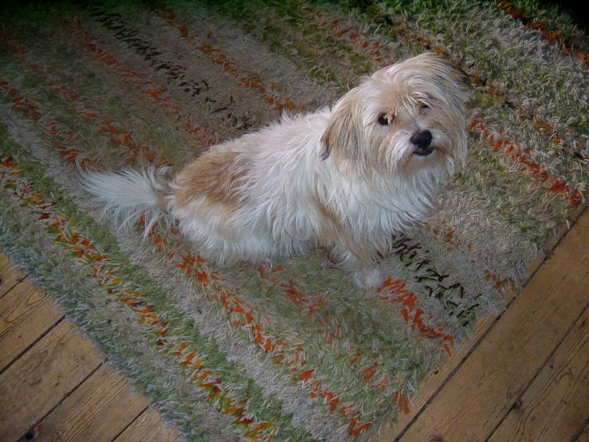 orange stripe dog