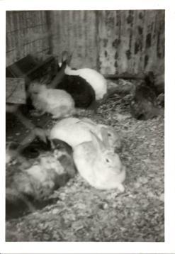 g-rabbits