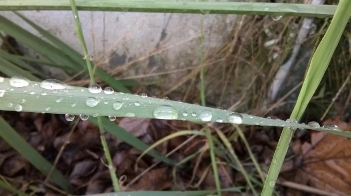 grassy raindrops