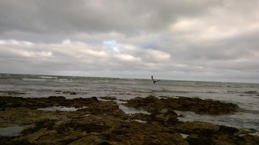 20150511 pelican2