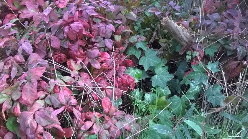 and for something different - a wild spot in my garden