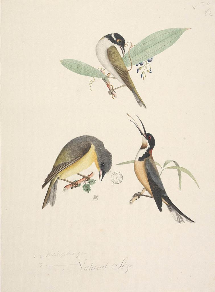 watercolour birds