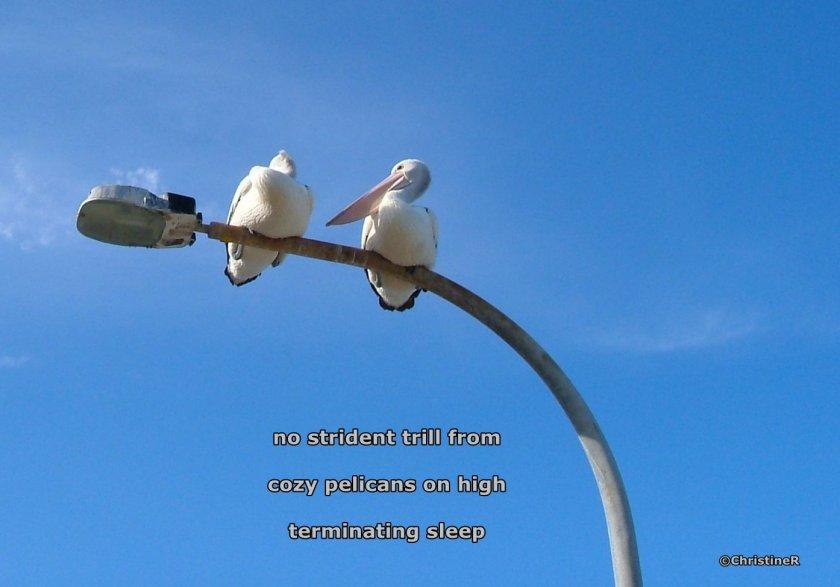 haiku81.jpg
