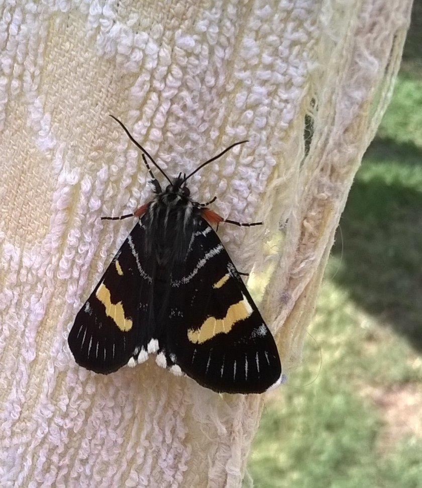 mothg