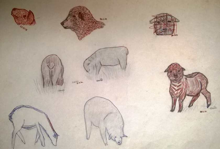sketchbook - 1970-1971 sheep