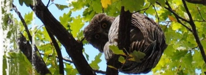 cropped-cropped-cropped-cropped-cropped-owl3.jpg