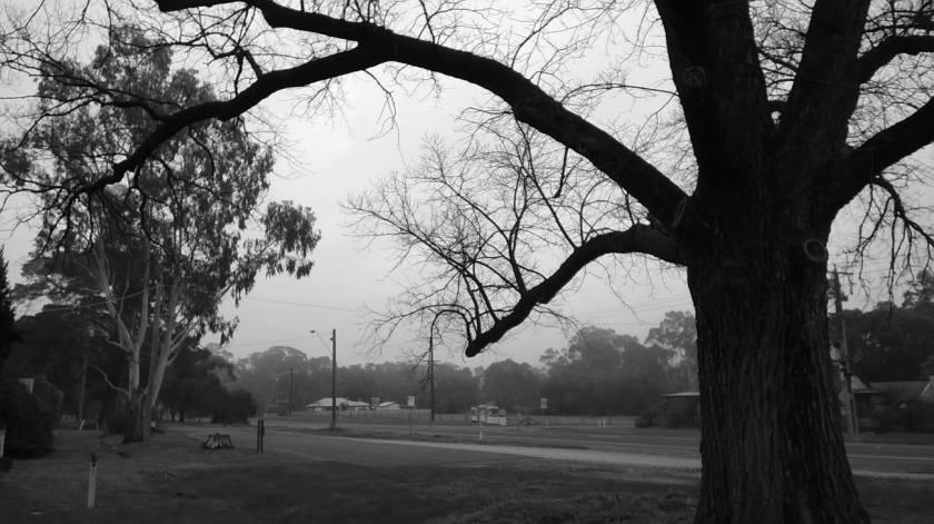 foggy rural living landscape