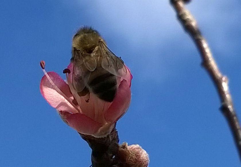 exspringbees 181