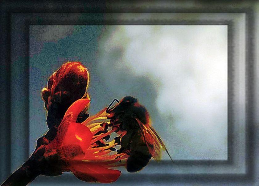 Mequalizedexspringbees 165