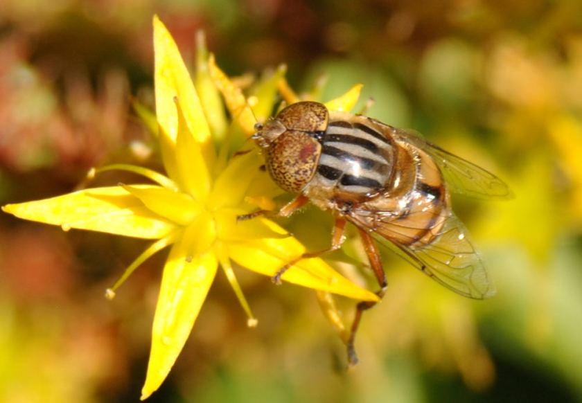 dronefly1