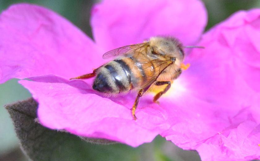 pinkbee1