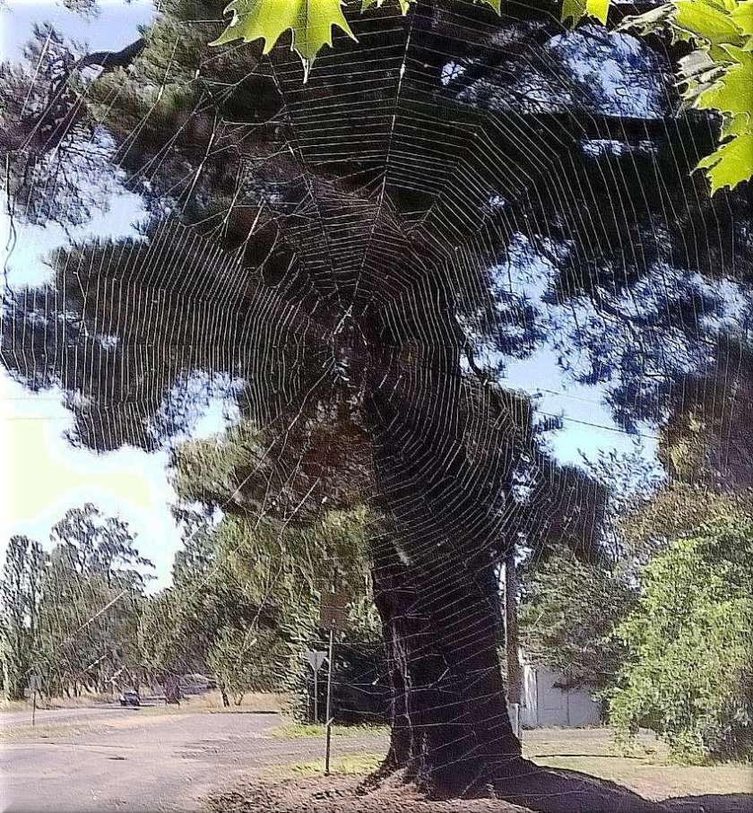 embossedbevelweb
