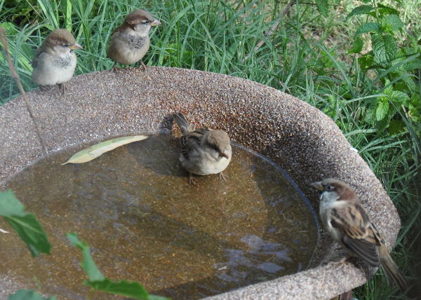 4sparrowDSC_3247