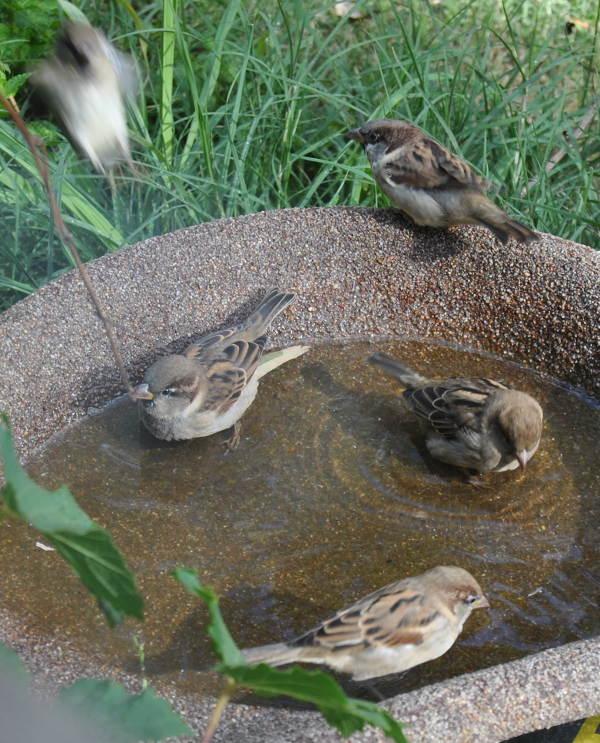 5sparrowDSC_3248