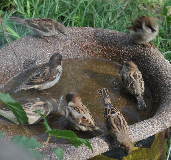 7sparrowDSC_3254