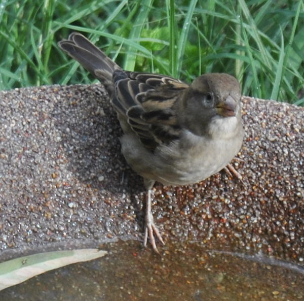sparrowDSC_3246