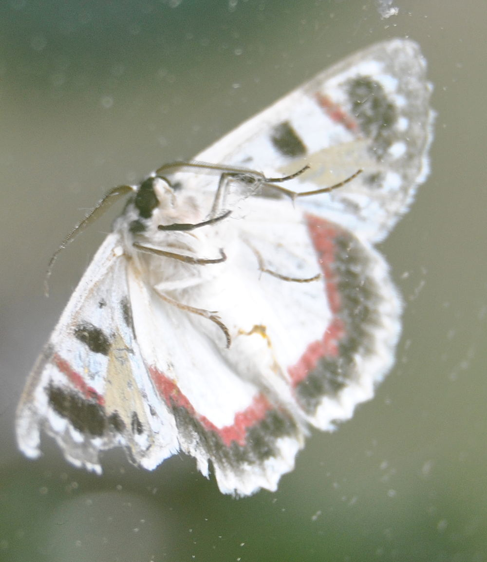 mothDSC_3712