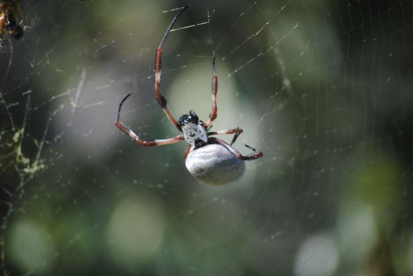 spiderDSC_3542