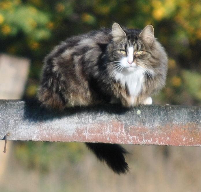 catDSC_4177