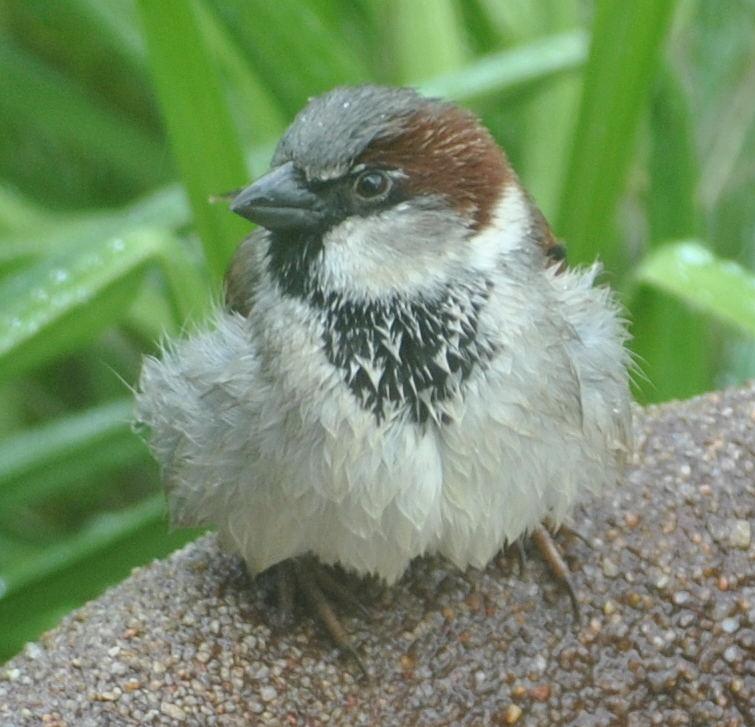 sparrowDSC_4853