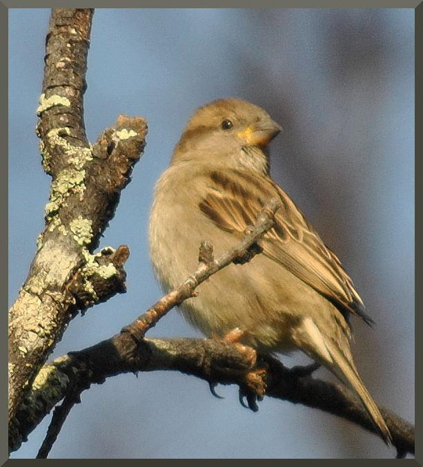 sparrowDSC_4934