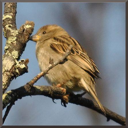 sparrowDSC_4935