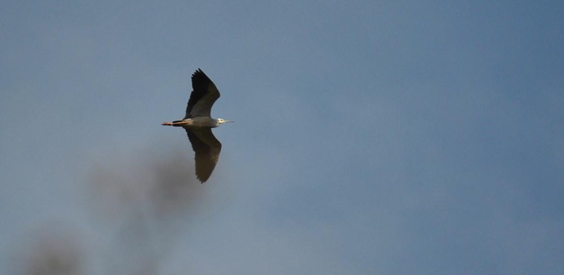 flyingegret