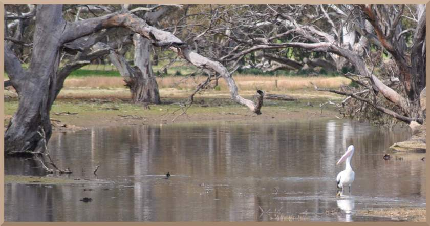 pelicanincreek
