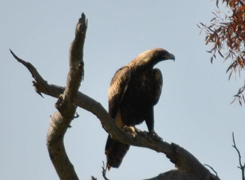 eagle6752